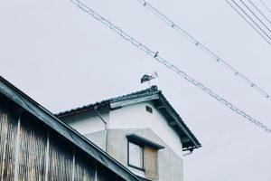 写真:家の屋根にコウノトリ